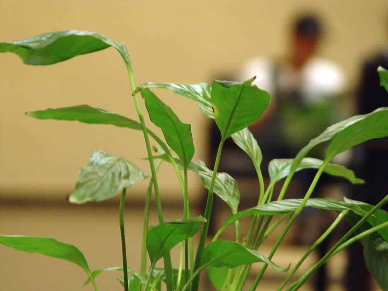 Best plants for the office space